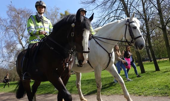 Mounted police in park