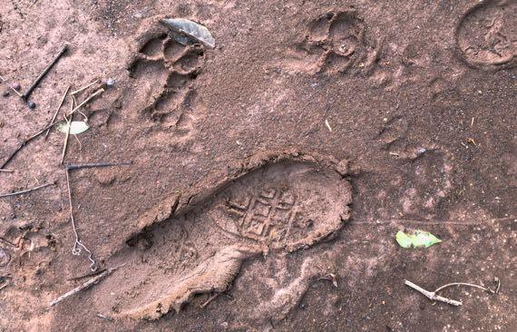 Mud prints