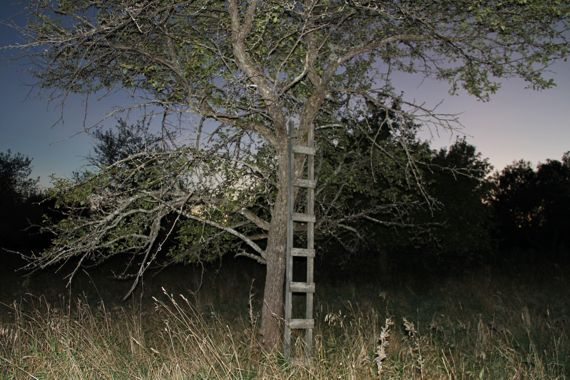 night_flash_ladder_apple_tree.jpg