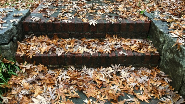 Oak leaf steps