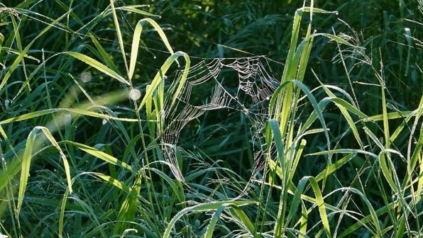 One spider web damaged