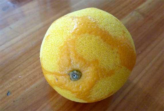orange_naked.jpg