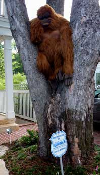 orangutan_in_tree.jpg