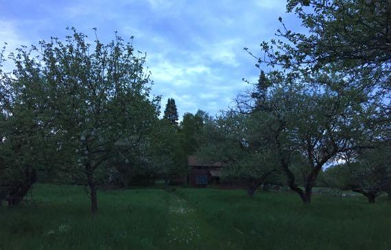 Orchard dusk dandies