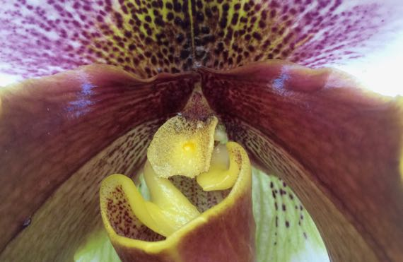 Orchid undazed