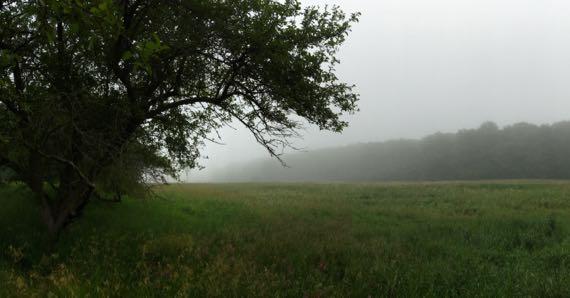 Orning fog field