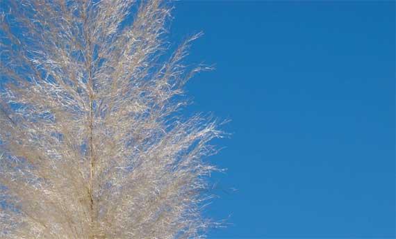 pampas_sky.jpg