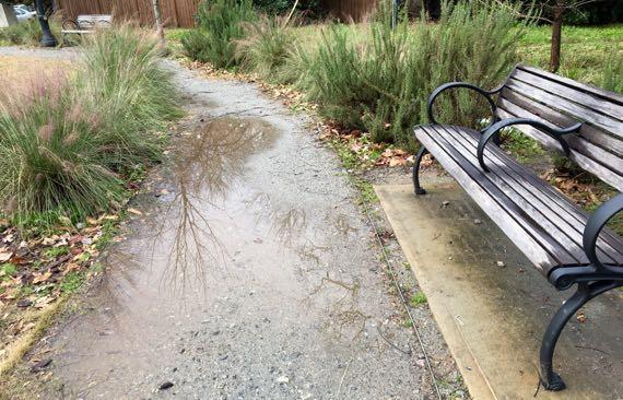 Park path puddles