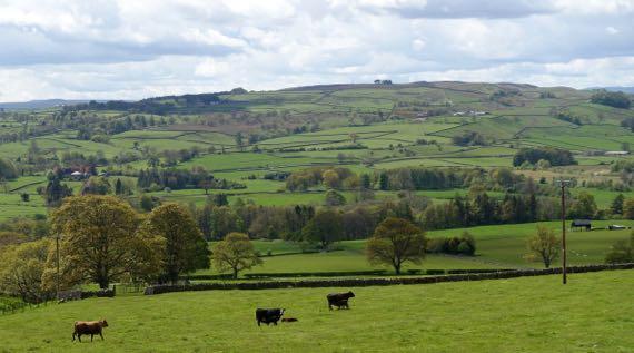 Pasture stonewalls