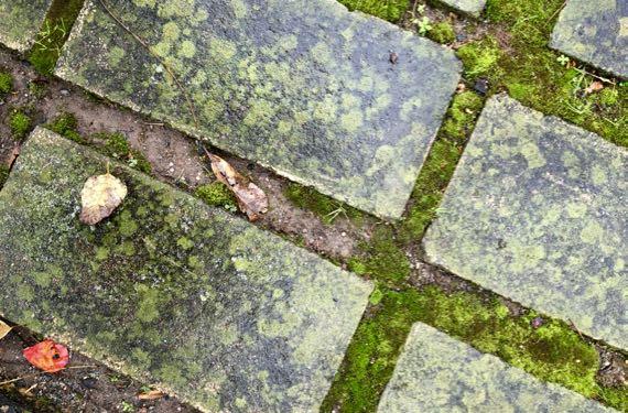 Paving stones slick