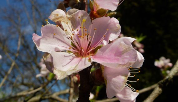 Peach blossom in mar of all things