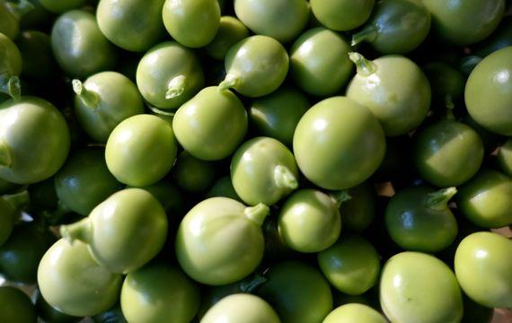 Peas shelled very fresh