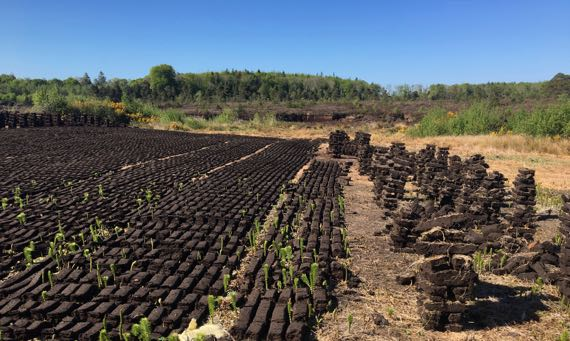 Peat turves drying