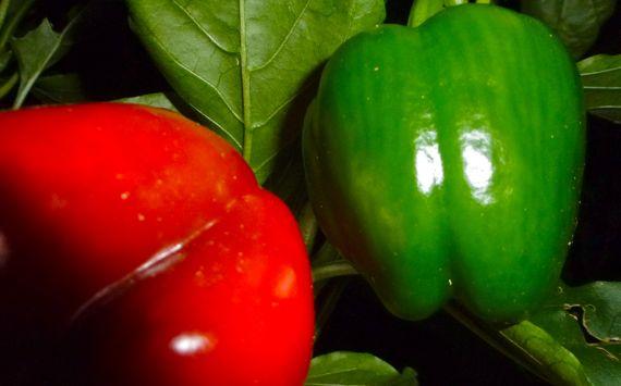 Pepper twins red n green