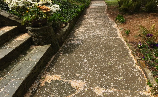 Petal sidewalk