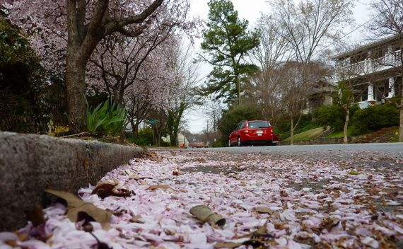 Petals in the gutter 2011