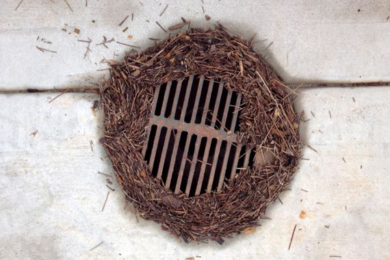 Pine needles around drain