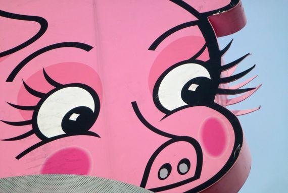 Pink pig CU