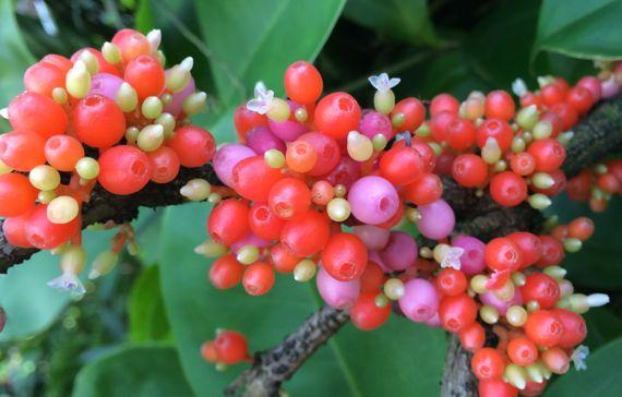 Plant as gems