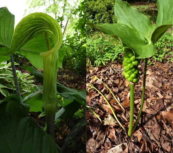 plant_comparison.jpg