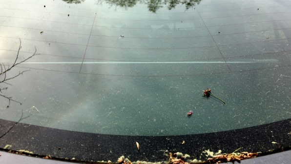 Pollen carglass