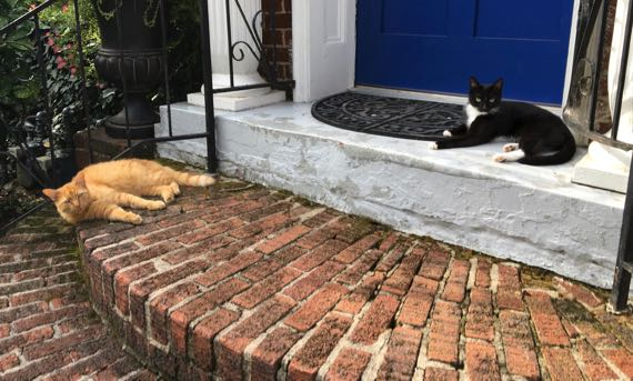 Porch cat duo