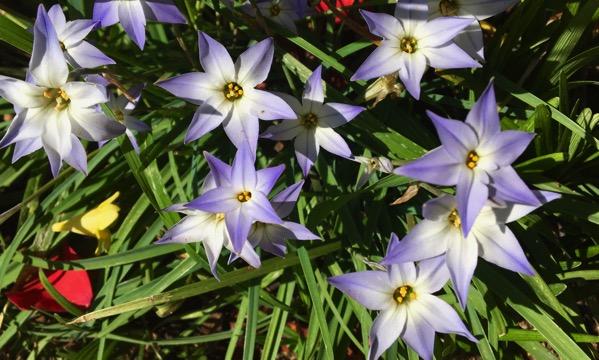 Pretty spring fleurs