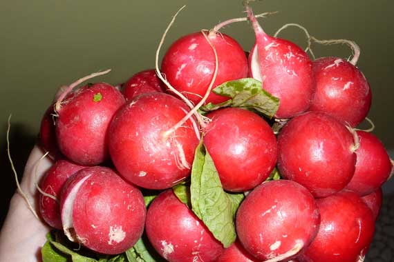 radish_red_bundle.jpg
