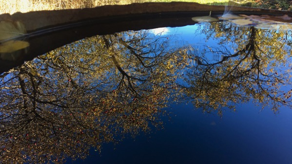 Rainbarrel reflection leaves