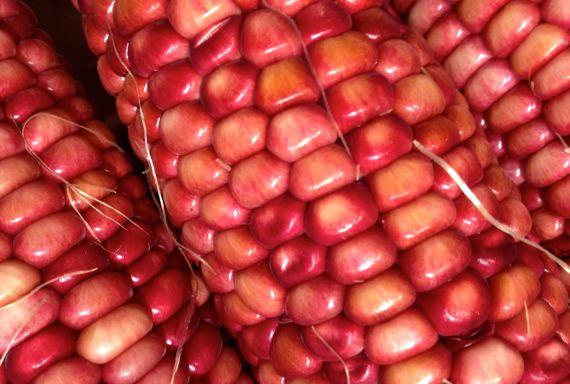 Red maize cob trio