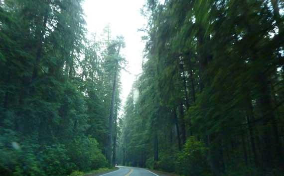 redwoods_dirty_window.jpg