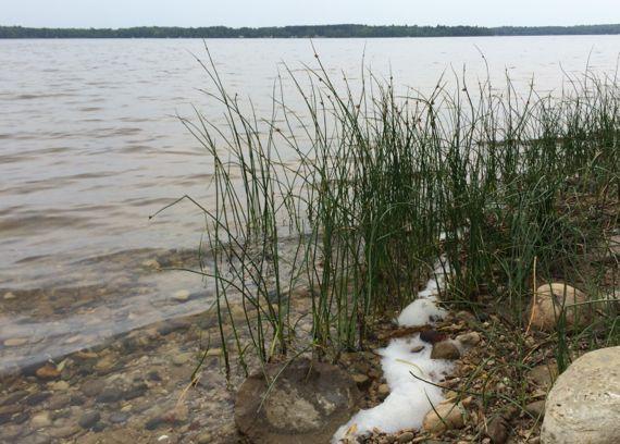 Reeds whitefish lake