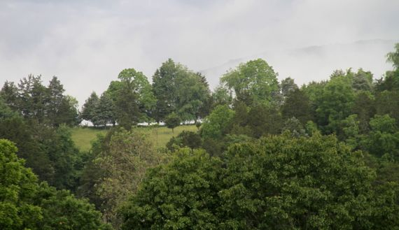 Ridge top through trees