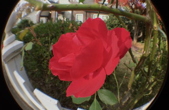 Roses world