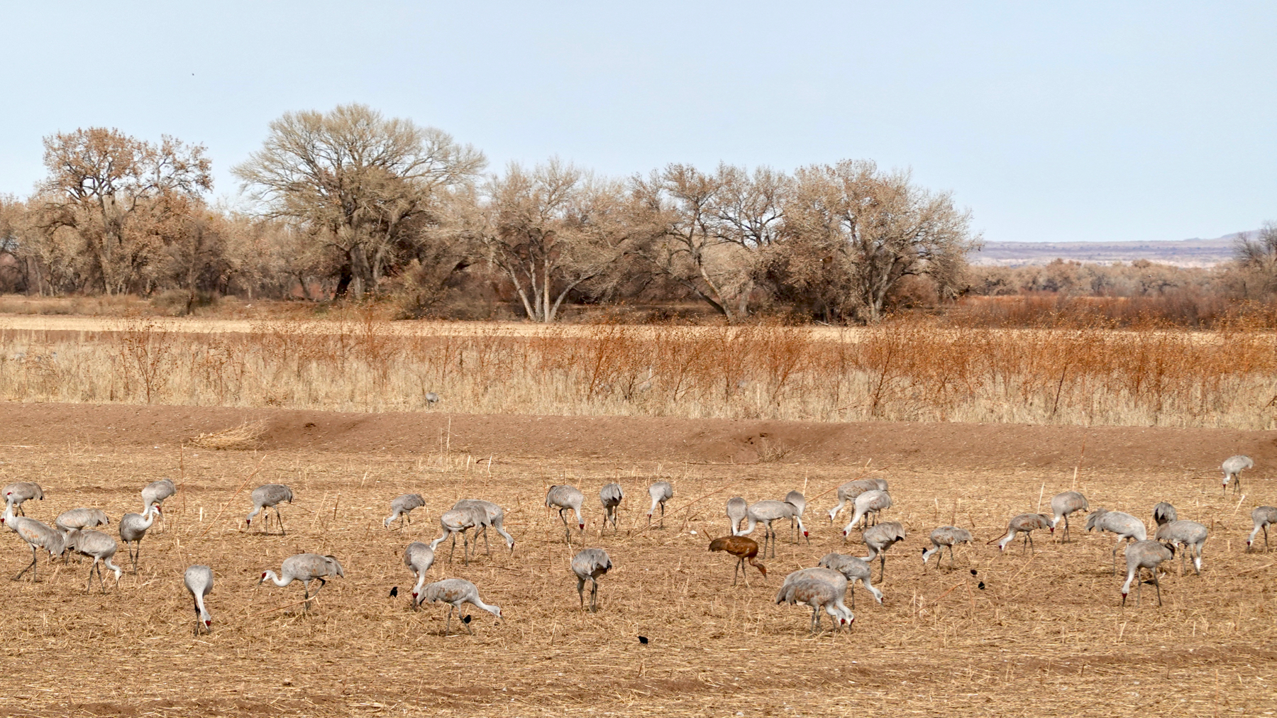 Sandhills at Bosque