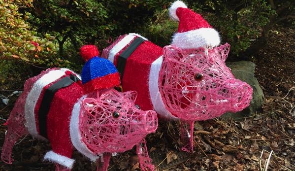 Santa pig duo