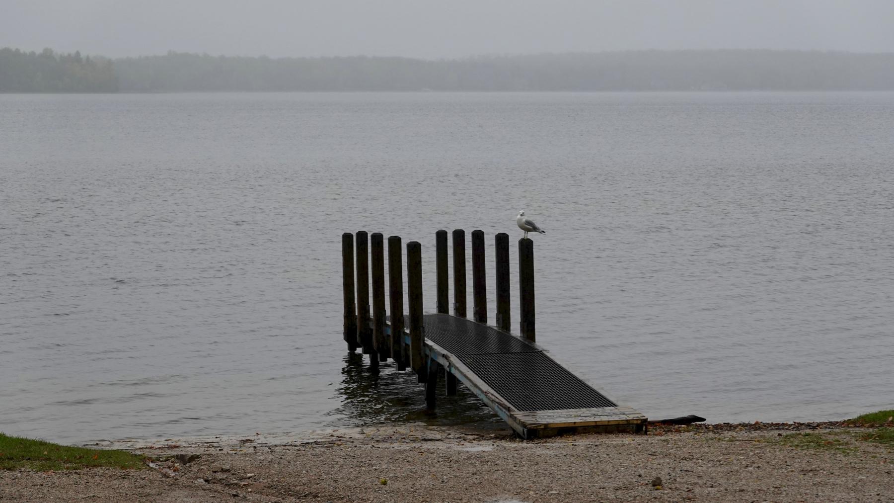 Seagull boatdock