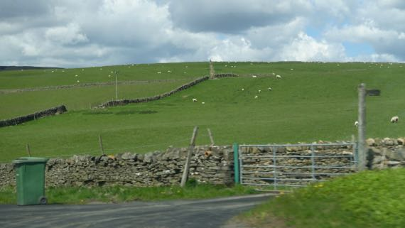 Sheep dots stonewalls