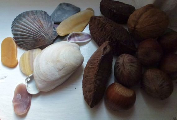Shells and nuts windowledge