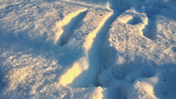 Slant sun on snow