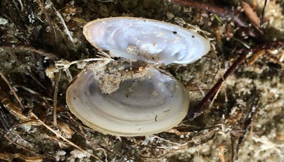Small clamshell