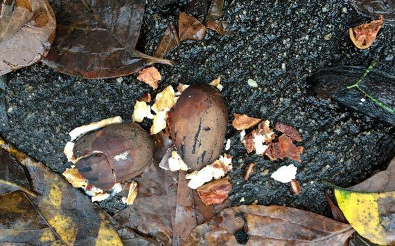 Smashed pecan