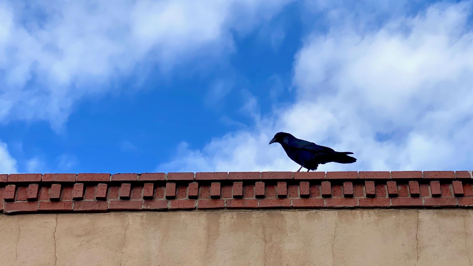 Solo crowlo