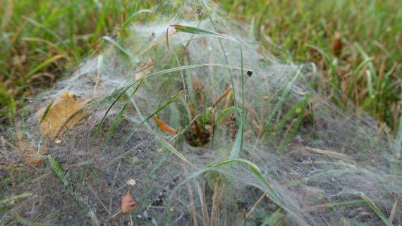 Spider ground web