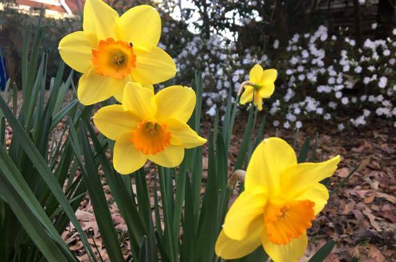 Spring fleur combo