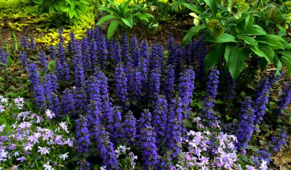 Spring garden ette