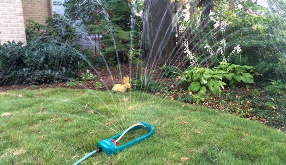 Sprinkler yellow rabbit