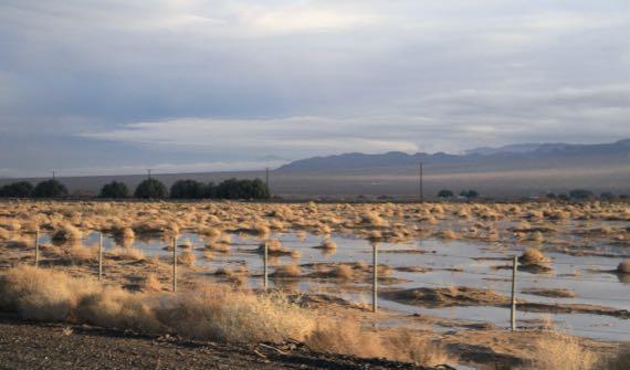 Standing water desert