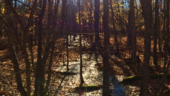 Standing water woods