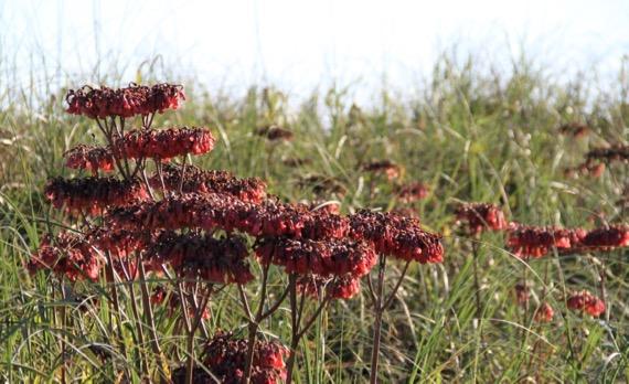 Strange dune flowers